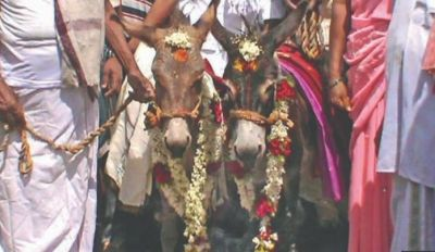 Two donkeys married in this state for rain