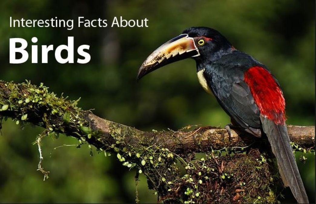 पीछे की ओर भी उड़ सकता है ये पक्षी, जानें पक्षियों के बारे में रोचक जानकारी