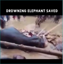 VIDEO: Tiny 'Elephant' trapped in water, this happened when people came to rescue