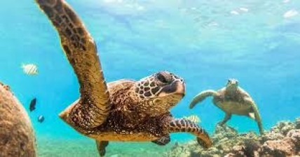 Know amazing facts related to turtles