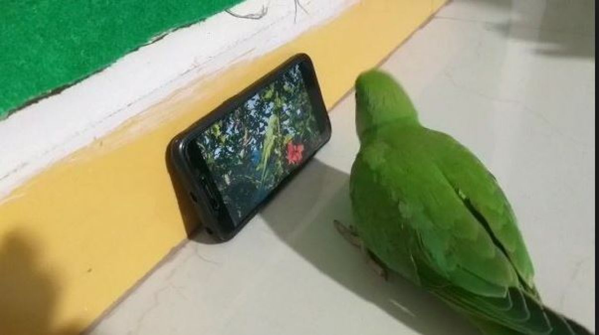 This parrot got addicted to mobile, can't live without it