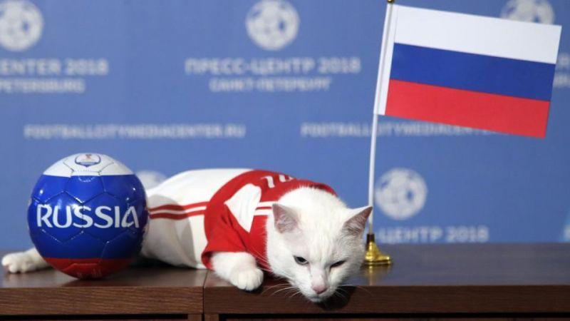 FIFA World Cup: कौन होगा इस बार चैंपियन, बताएगी यह बिल्ली