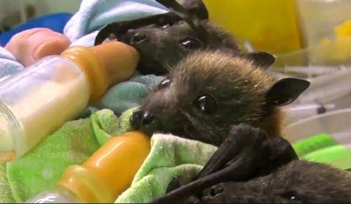 Here is the Hospital for Bats to take care of diseases