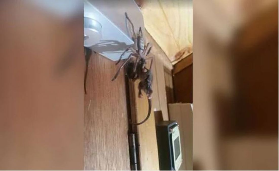 When a Spider swallowed this animal, peoples left out speechless