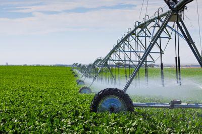 इन देशों में उगाया जाता है पानी