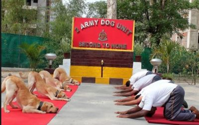 Dogs also performed yoga on the special occasion of Yoga Day, watch video