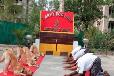 Yoga Day:  Army Dog Also Done Yoga with Army Men, Photos Seen Fiercely
