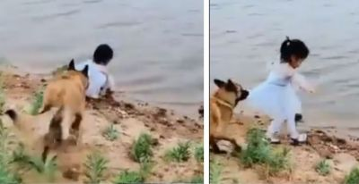 Video: To resucue, a Girl  this dog did the shocking task
