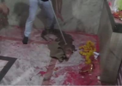 Crocodile rammed into mother's temple, people began to worship