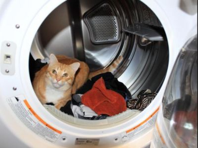 Cat trapped in the washing machine for half an hour, has this condition in hospital