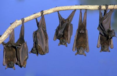 Amazing Facts: Interesting Facts about bats