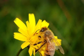 Interesting facts about honey bees that you should know