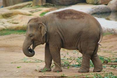 Prank of this little elephant winning hearts, watch video here