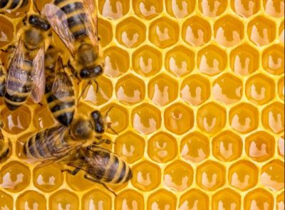 These bizarre facts about bees will amaze you!