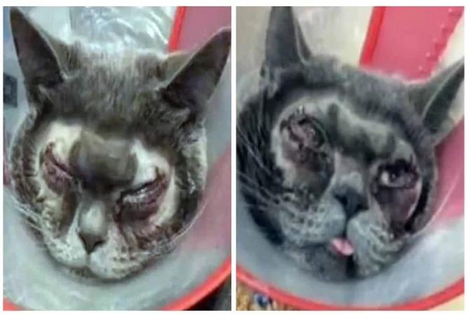 महिला ने अपनी बिल्ली की करवा दी प्लास्टिक सर्जरी, लोग दे रहे खूब गालियां