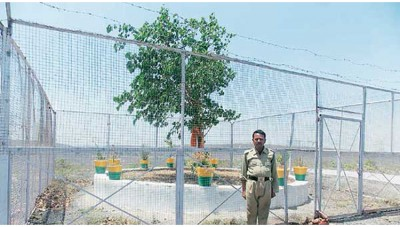 Madhya Pradesh Police takes care of this tree, spends about 15 lakh rupees per year