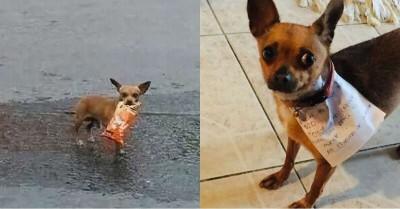 Corona: This quarantined man order food through his dog