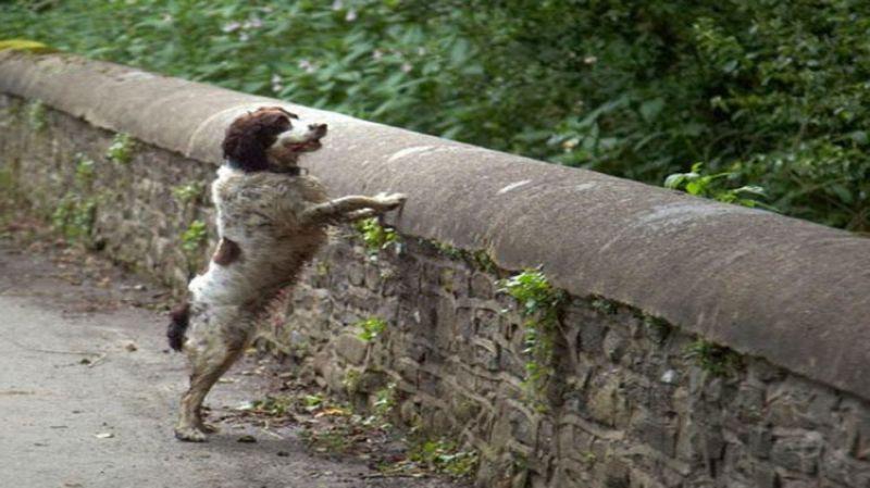 स्कॉटलैंड का वो रहस्यमयी ब्रिज, जो अपनी तरफ आकर्षित करता है कुत्ते और फिर...