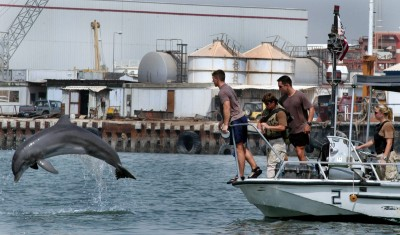Dolphin and sea lion army protect nuclear weapons at this place