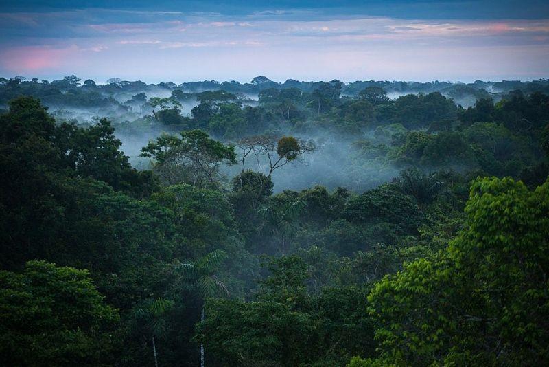 रहस्यों का खजाना है दुनिया का सबसे बड़ा वनक्षेत्र
