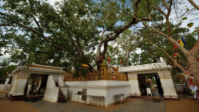The tree under which Lord Buddha attained enlightenment, such a miracle happened after being destroyed twice
