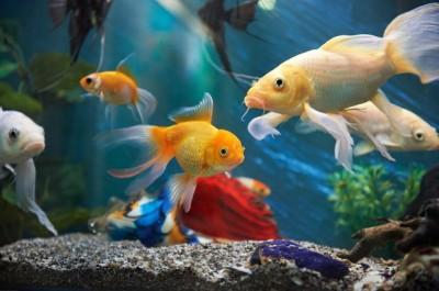 Dog saved goldfish, video going viral