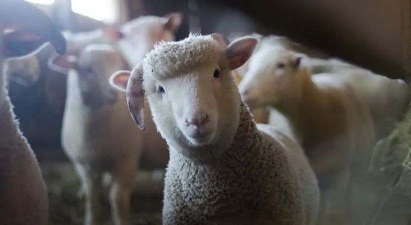 बच्चे कम होने के कारण बंद हो रहा था स्कूल, तो करवा दिया भेड़ों का एडमिशन