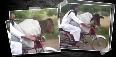Video : पाकिस्तानी शख्स ने गाय को बाइक पर बैठा कराई सैर, लोग रह गए हैरान