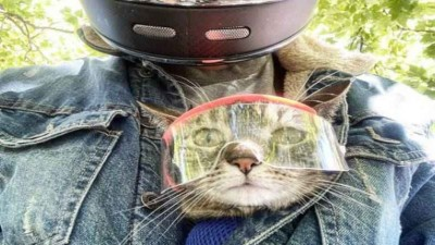 This cat is in the news, loves biking adventure & goes on a trip