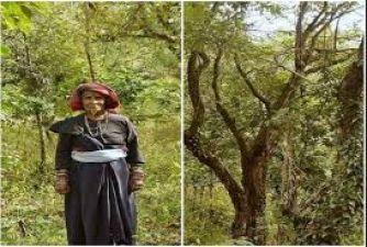 दादी ने लगाए इतने पेड़, बदल गयी गांव की तस्वीरें