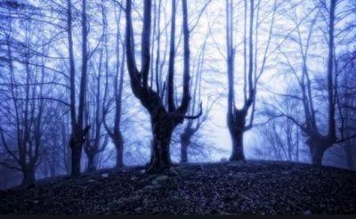 ऐसा जंगल जंहा जाने के बाद कोई वापस नहीं आता