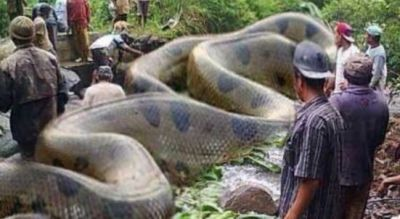 This man has a 18 feet long creature at home, you will be shocked to see