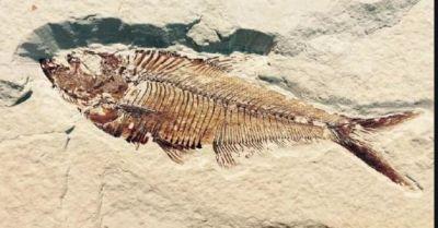 दुनिया की सबसे जहरीली मछली, जिसका एक बूंद जहर दे सकता है मौत