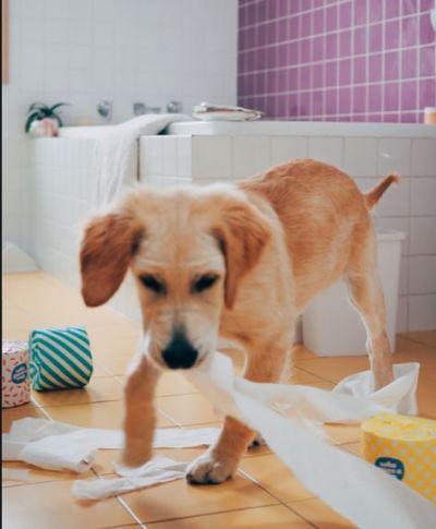 World Toilet Day: एक ऐसा देश जंहा कुत्तों के लिए अलग से बनया जाता है शौचालय, जानिए क्या है खासियत