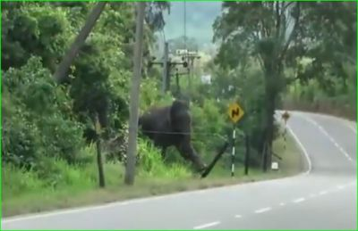 This video of elephant is becoming fiercely viral, people praising