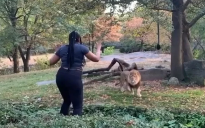 This lady tried to play with the lion, Know what happened later, watch video here