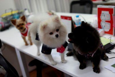 यहां कुत्ते भी जाते हैं सुबह जल्दबाज़ी में ऑफिस