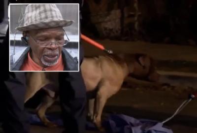 कुत्ते ने अपनी ही मालकिन के साथ किया ऐसा गंदा काम, एक बार में निकाली सारी भड़ास
