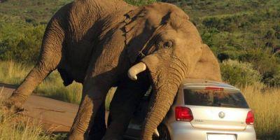 फोटो क्लिक करने पर हाथी को आया गुस्सा, फिर हुआ लोगों का ये हाल