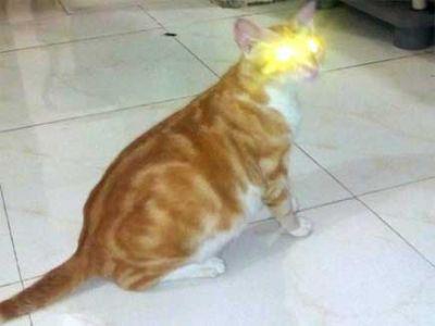 ऐसी बिल्ली जो बदलती है अपना रंग