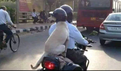 This four-year-old picture of dog wearing helmet again going viral