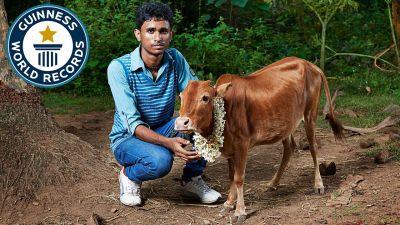 इस खास बात के कारण गाय का नाम हुआ वर्ल्ड रिकॉर्ड में दर्ज