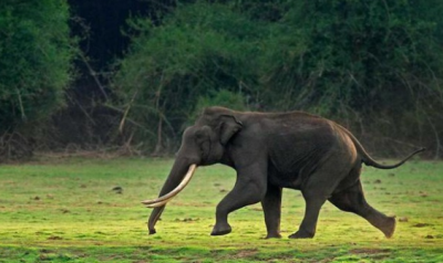 Video: Angry elephant trashes man bicycle, escaped narrowly