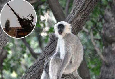 जब 20 लोगों की मौत का कारण बना एक बंदर, जमकर चले बम और गोले