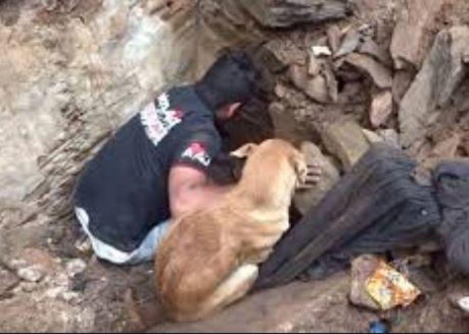 Video: Dog's puppies were buried deep under debris, This man helped