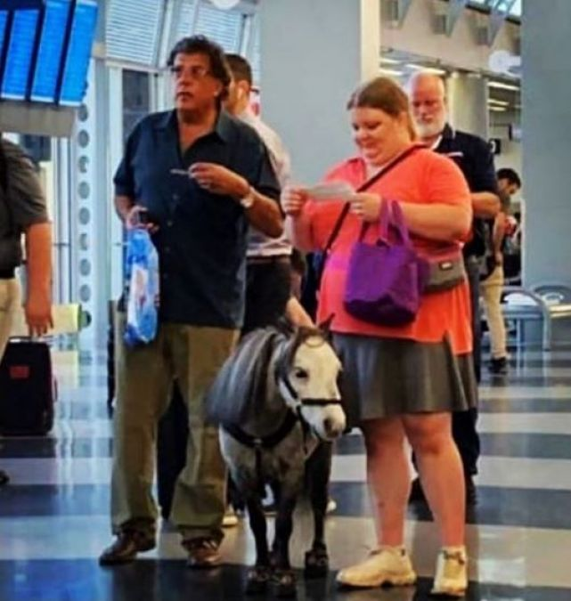 The woman was seen with a horse in flight, see viral video!