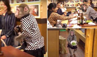 ये हैं जापान का अनोखा रेस्टोरेंट, जहाँ कोई इंसान नहीं बल्कि बंदर परोसते हैं खाना