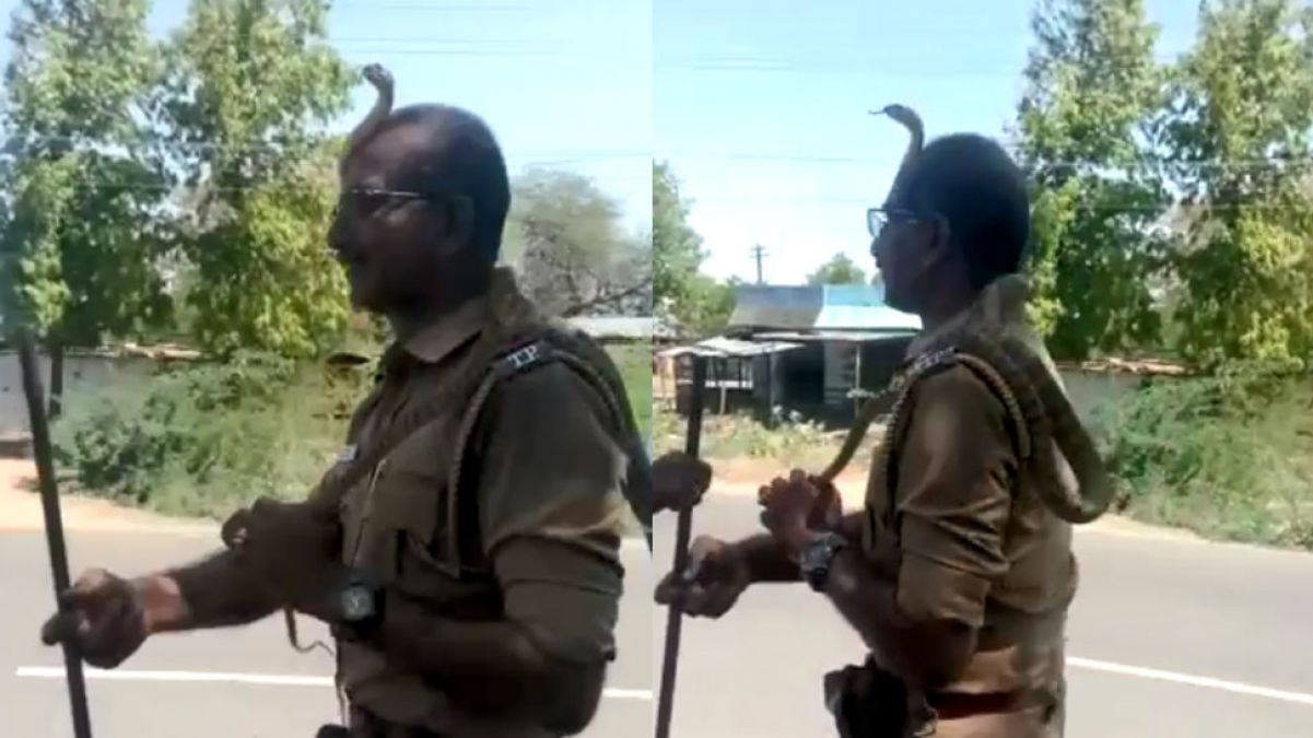 The snake was hanging on the tree, Here's how a brave policeman caught it