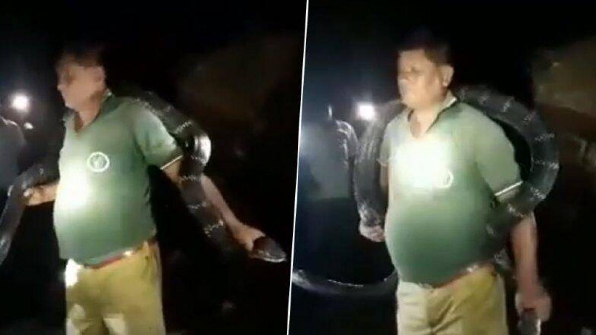 फॉरेस्ट गार्ड ने किंग कोबरा को डाला गले में, वायरल हुआ वीडियो