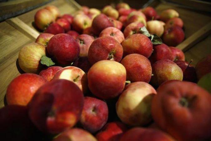 सेब बेचने से ही गई सभी कर्मचारियों की नौकरी